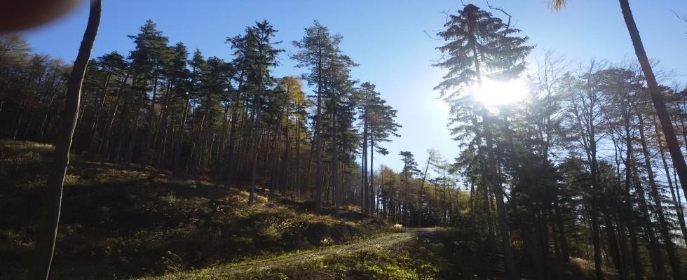 Circa 33 Hektar Zukunftswald für Anlage in Graz Stattegg zu kaufen!