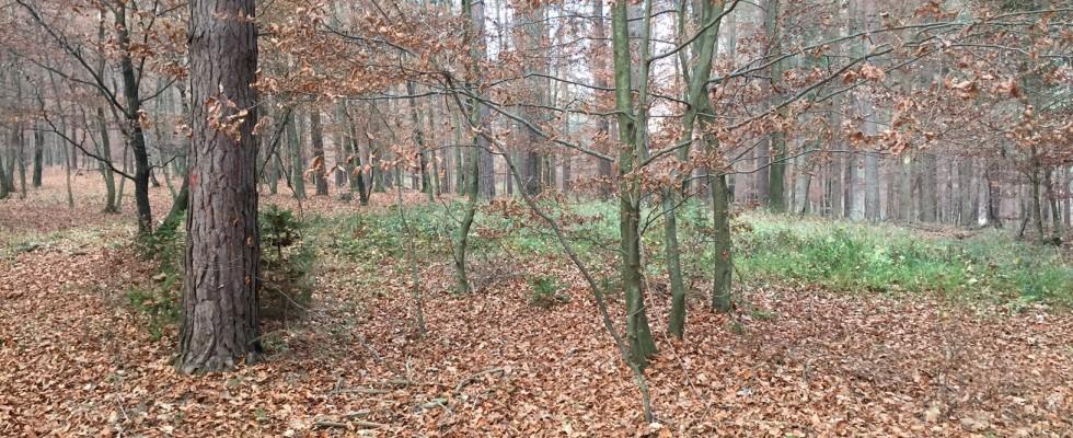 Ertragswald ca. 62,5 Ha. Hodos  Slowenien