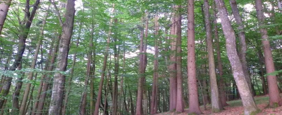 Mischwald circa 4,9 Hektar mit gutem Bestand. AUCH EINE GUTE ANLAGE! VERKAUFT!
