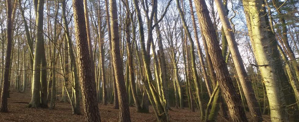VERKAUFT! Gleisdorf Nähe: Mischwald circa 3,8 Hektar für Eigenbedarf oder für Anlage.