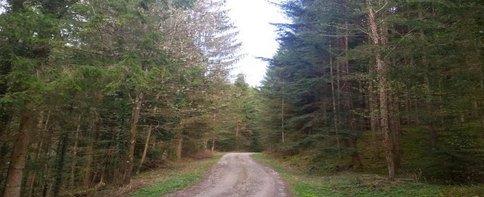 WEST – STEIERMARK: Mischwald mit ca.11,9 Hektar sucht neuen Besitzer!