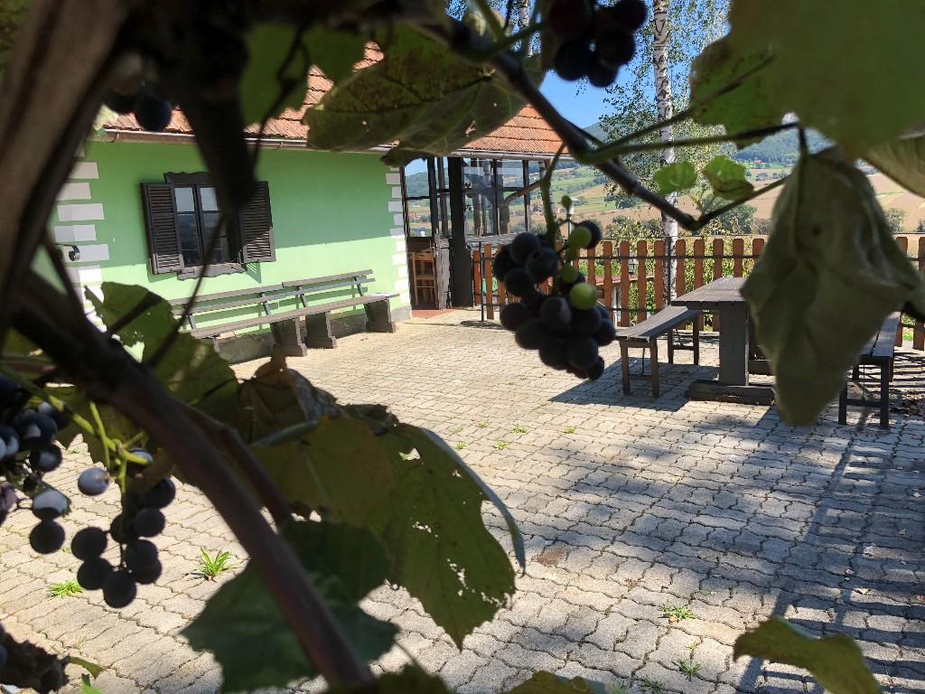 Kellerstöckl mit Weingarten, Bad Gleichenberg – Südoststeiermark