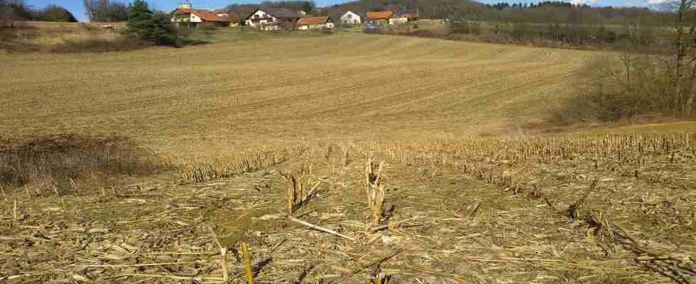 FELDBACH Nähe: Landwirtschaftliche Flächen mit circa 5,6 Hektar (Errichtung einer Haus und Hofstelle möglich)