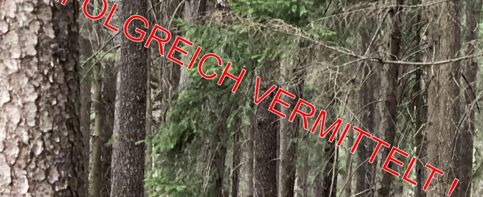 Wald vermittelt
